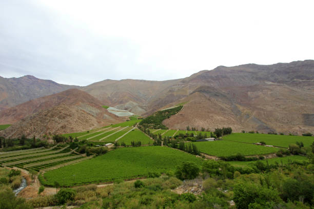 Vineyards used for Pisco in the dry Elqui Valley, Chile stock photo