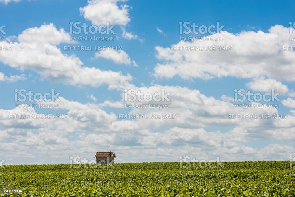 Vineyards Veuve Clicquot stock photo