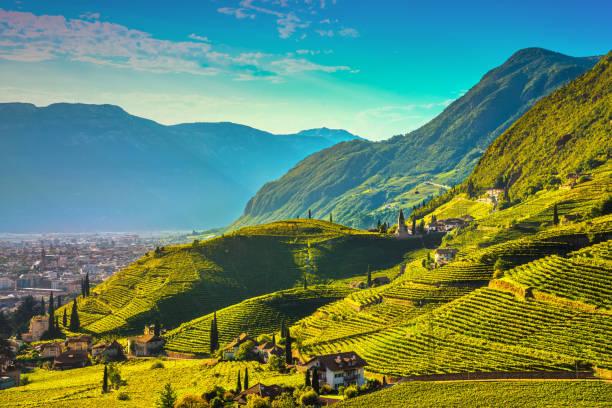 Vineyards view in Santa Maddalena Bolzano. Trentino Alto Adige Sud Tyrol, Italy. Vineyards view in Santa Maddalena Rencio Bolzano. Trentino Alto Adige Sud Tyrol, Italy, Europe. trentino alto adige stock pictures, royalty-free photos & images