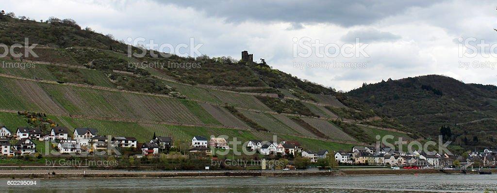 Vineyards, Village, Rhine, Germany stock photo