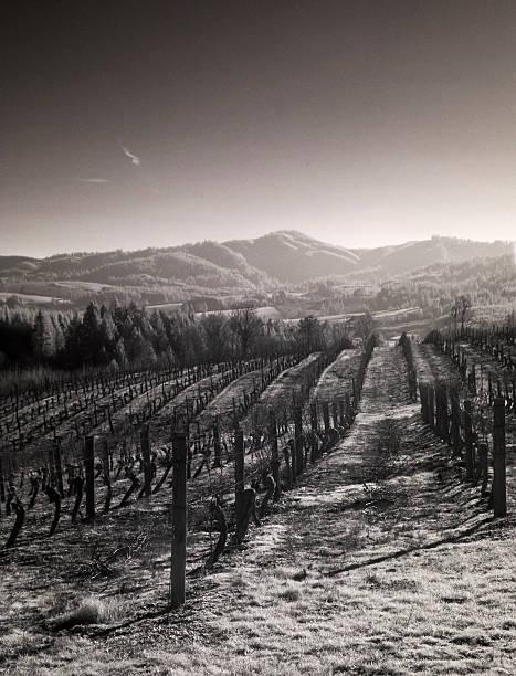 Weingütern Willamette Valley in Infrared – Foto