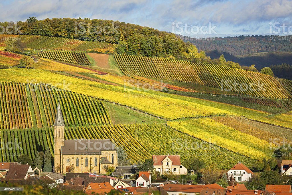 Vineyards with autumn colors, Pfalz, Germany stock photo