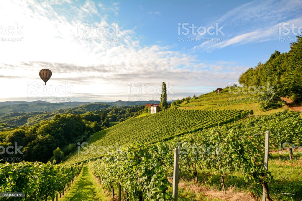 Vineyards with hot air balloon near a winery before harvest in the tuscany wine growing area, Italy Europe stock photo