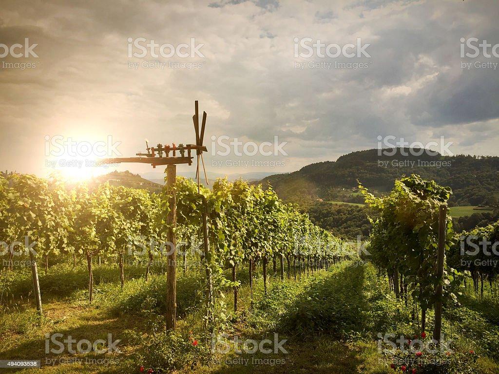 Vineyards with Klapotetz before harvest, Southern Styria near Leibnitz Austria stock photo