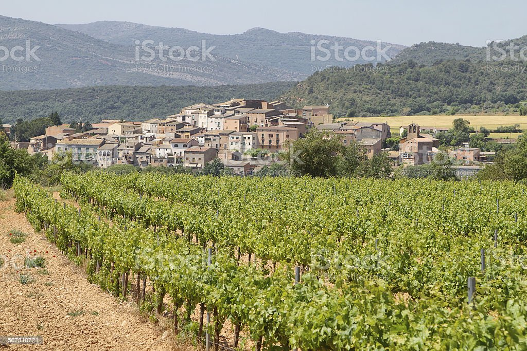 Vineyards with picturesque village at background stock photo