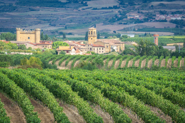 Vineyards with Sajazarra village as background, La Rioja, Spain stock photo