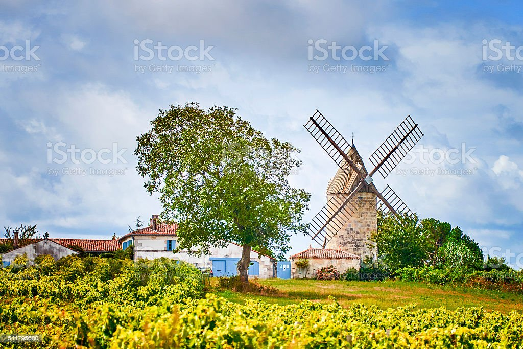 vineyards with windmill stock photo