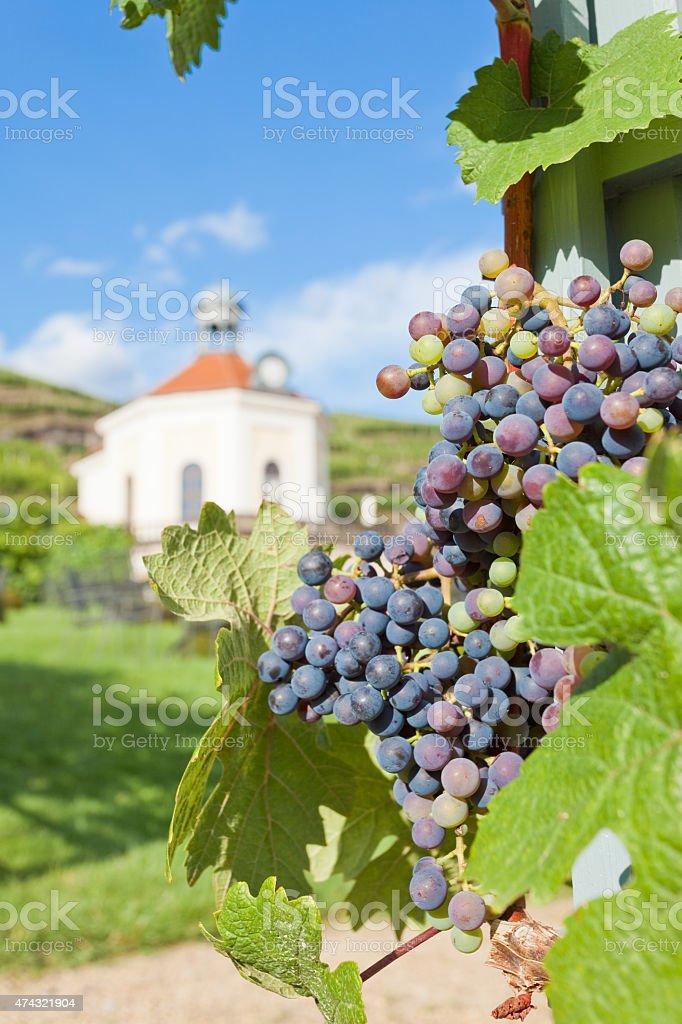 Weinbau – Foto