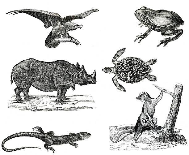 Vintage animals collection vol IV stock photo