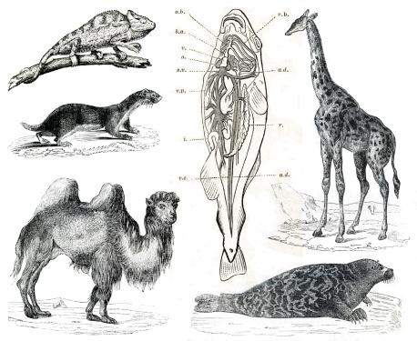 Vintage animals collection Vol IX