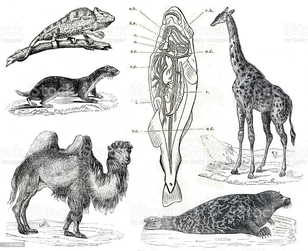 Vintage animals collection Vol IX stock photo