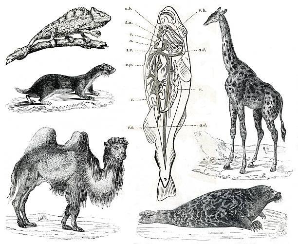 Vintage animals collection Vol IX stock photo