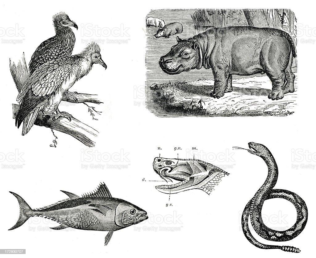 Vintage animals collection vol VI stock photo