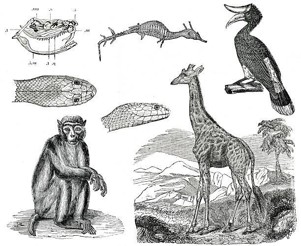 Vintage animals collection vol VII stock photo