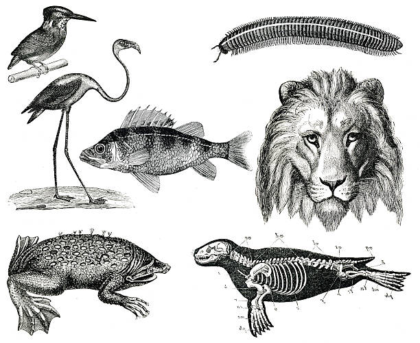Vintage animals collection vol VIII stock photo
