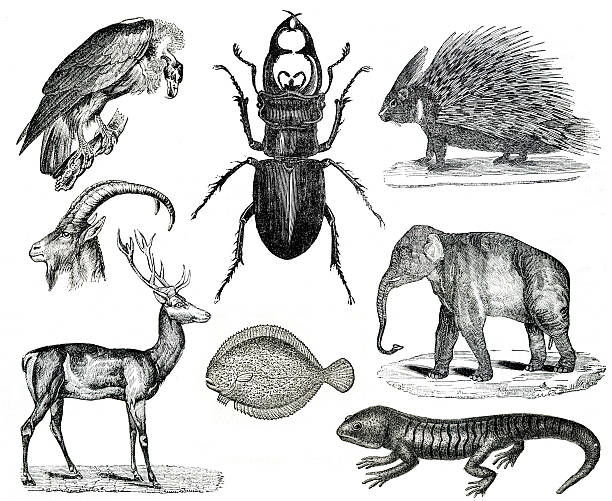 vintage animals collection vol x - pencil drawing stock pictures, royalty-free photos & images