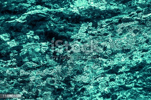 Vintage azure background. Rough painted wall of turquoise color. Imperfect plane of cyan colored. Uneven old decorative toned backdrop of aqzure tint. Texture of teal hue. Ornamental stony surface.