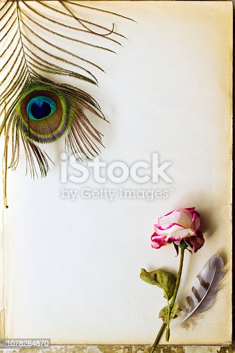 Vintage background with peacock feathers and dead rose