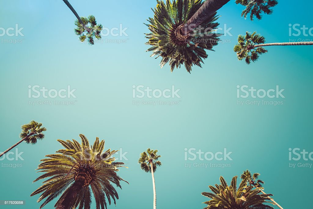 Vintage Beverly Hills Los Angeles Palm Trees stock photo