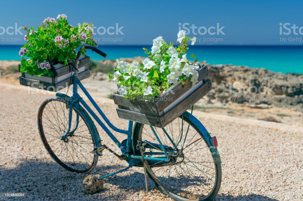Vintage bicycle adapted for flower arrangement (bicycle with basket of flowers) стоковое фото