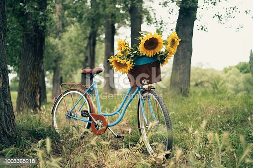 Vintage bicycle outdoors