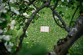 vintage book in apple blossoms
