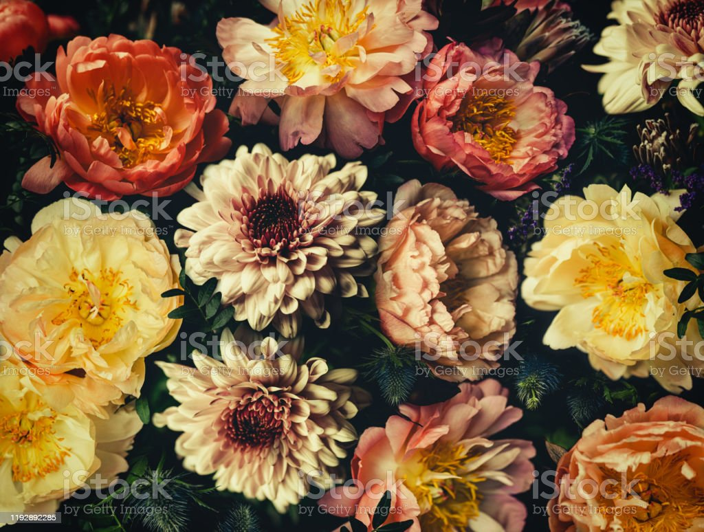 Vintage Bouquet Of Beautiful Flowers On Black Floral Background Baroque Old Fashiones Style Natural Pattern Wallpaper Or Greeting Card Stock Photo Download Image Now Istock