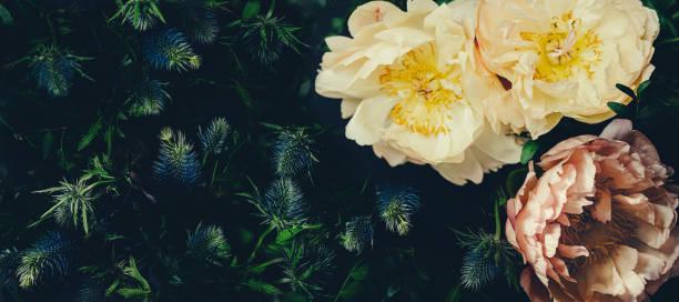 Vintage bouquet of peonies on black floristic decoration floral old picture id1205011155?b=1&k=6&m=1205011155&s=612x612&w=0&h=tt c8pbs54l7ntjkqcbfgy0xxziwzjvj0glushovsvk=