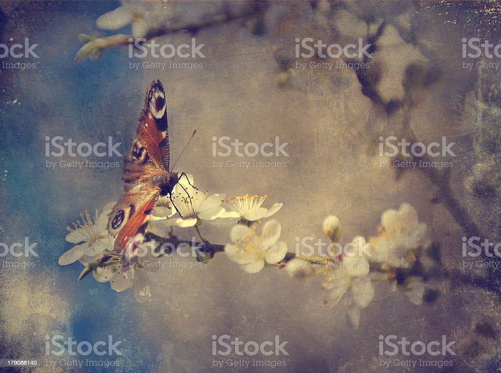 Vintage butterfly on cherry tree flower royalty-free stock photo