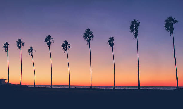 Vintage California Beach Photo Stock Downtown Los Angeles With Palm Trees