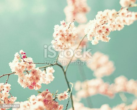 istock Vintage cherry blossoms 536054429