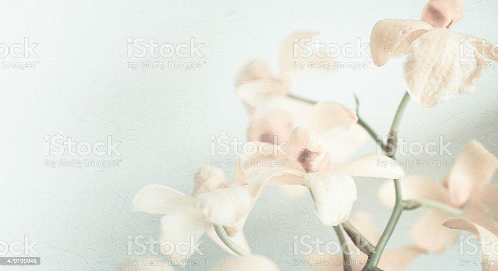 Orchidées couleur vintage en doux associe couleur et style - Photo