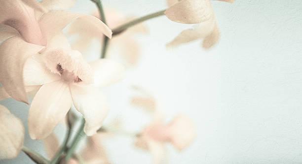 vintage farbe orchideen in sanften farben und blur stil - grüne wald hochzeiten stock-fotos und bilder