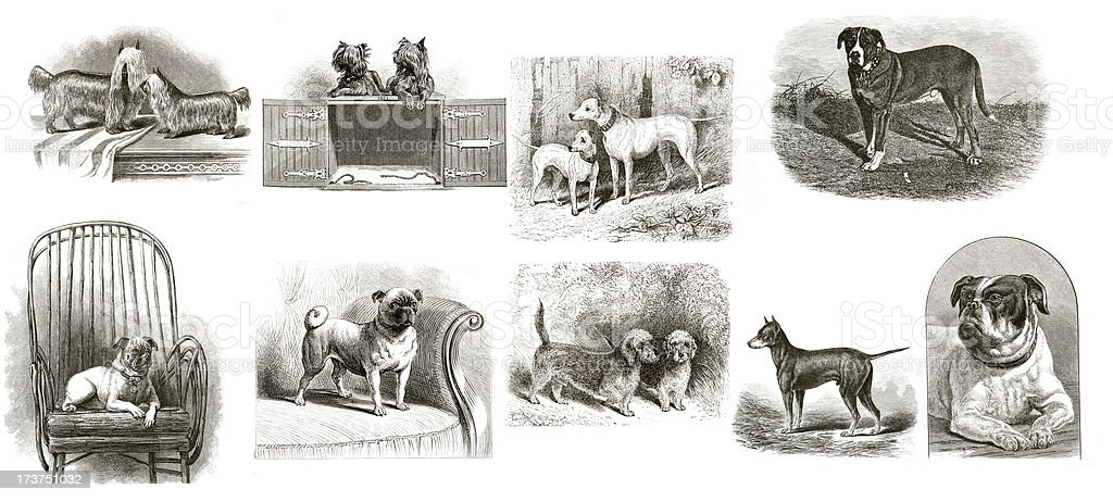Vintage Dogs Collection stock photo