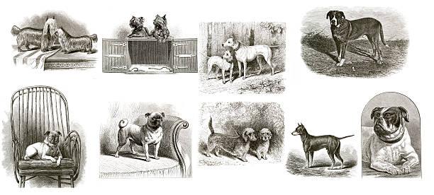 coleção de vintage de cães - cachorro desenho - fotografias e filmes do acervo