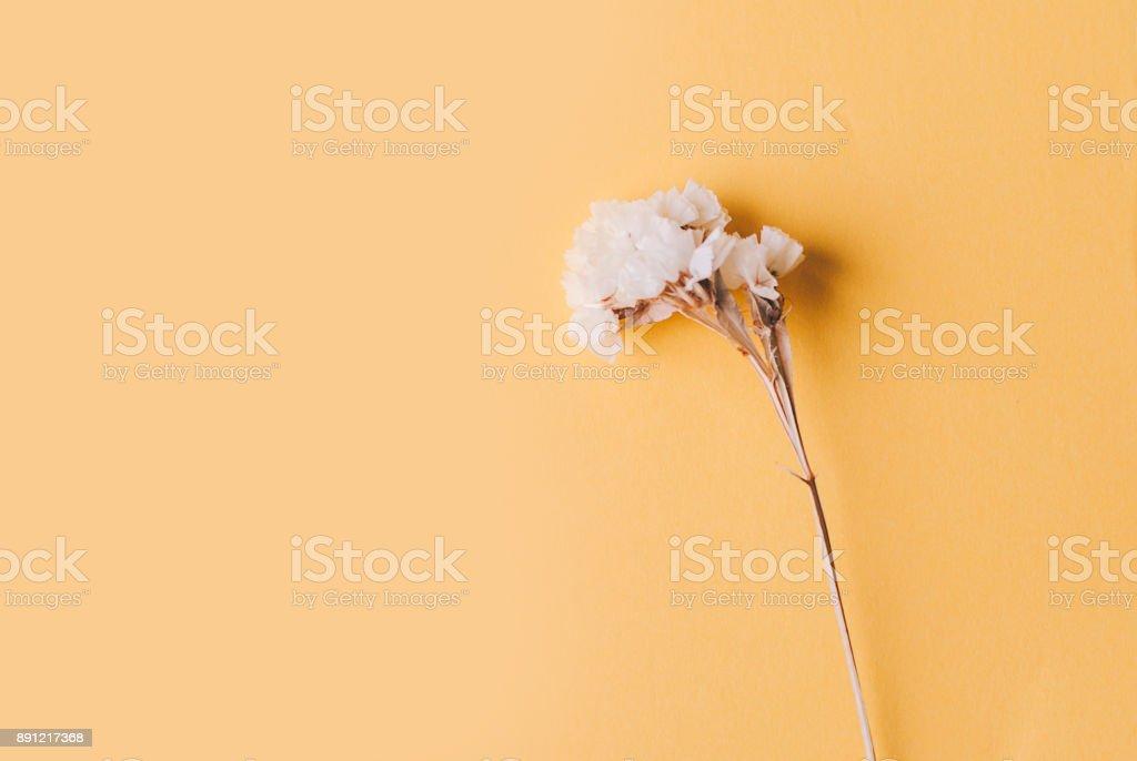 Vintage Dry Flower stock photo