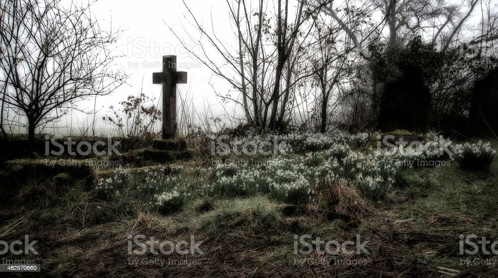 Vintage effect of a misty cemetery with snowdrops stock photo