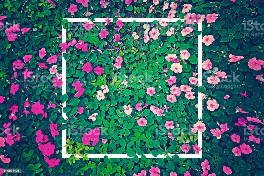 vintage effect photography of pink flowers garden with green leaves in background pattern with creative white frame border stock photo