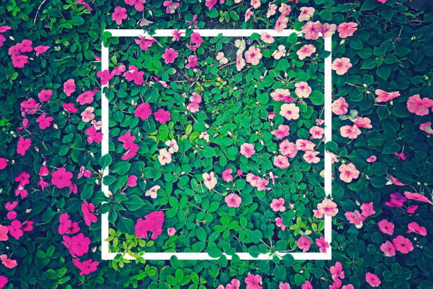 vintage effect photography of pink flowers garden with green leaves in background pattern with creative white frame border - flowers stock photos and pictures