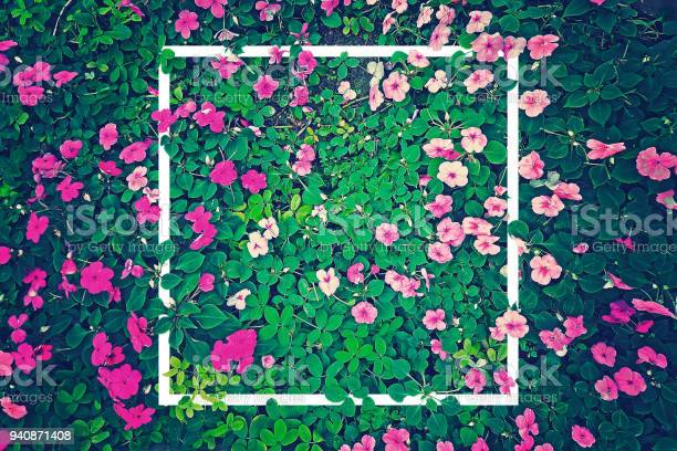 vintage effect photography of pink flowers garden with green leaves in background pattern with creative white frame border