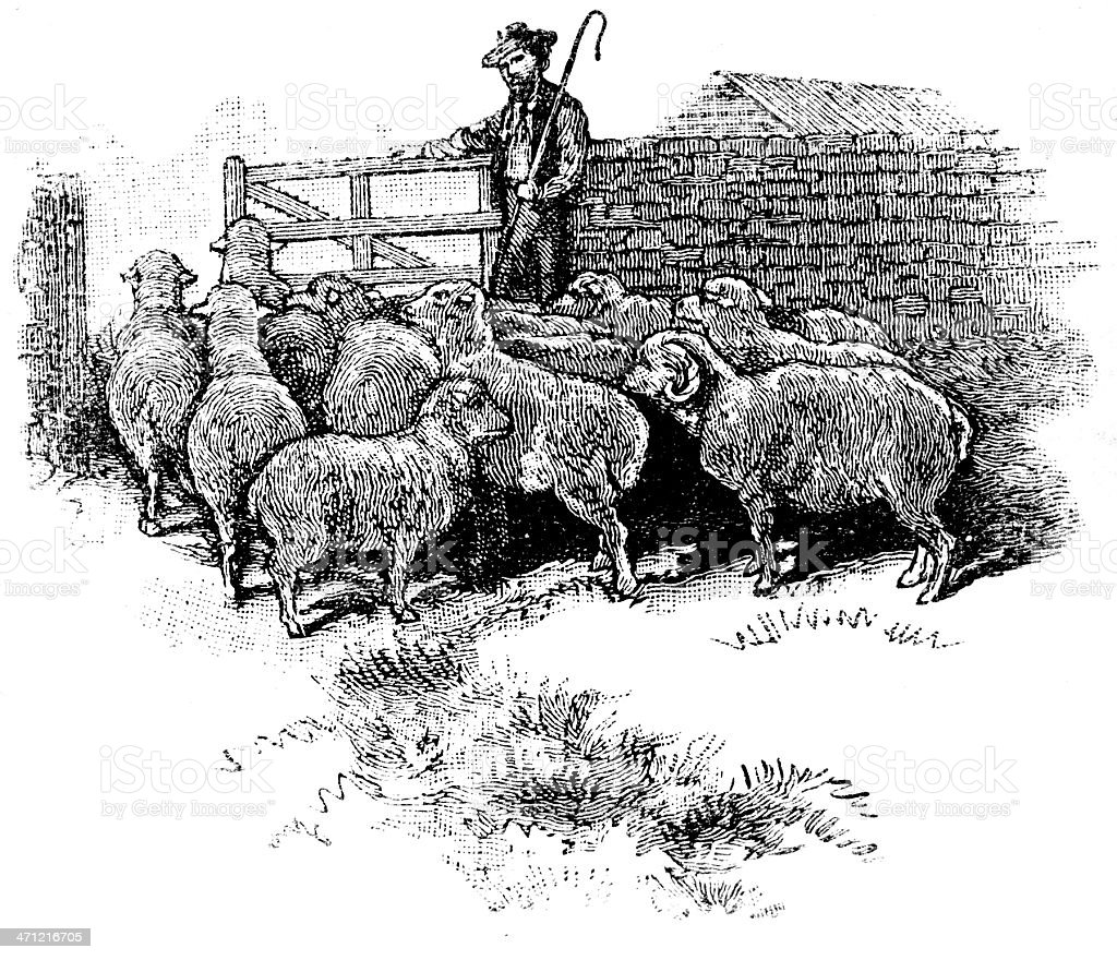 Vintage engraving of sheep and shepherd stock photo