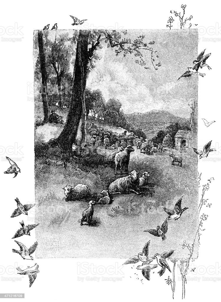 Vintage engraving of sheep on farm with birds on border stock photo