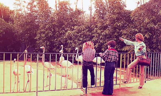 vintage family day at the zoo - viagens anos 70 imagens e fotografias de stock