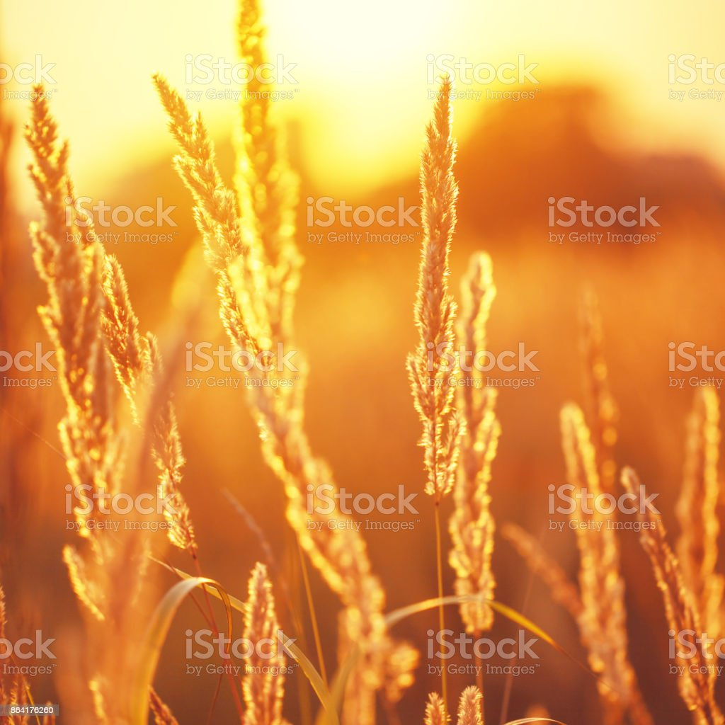 vintage field background royalty-free stock photo