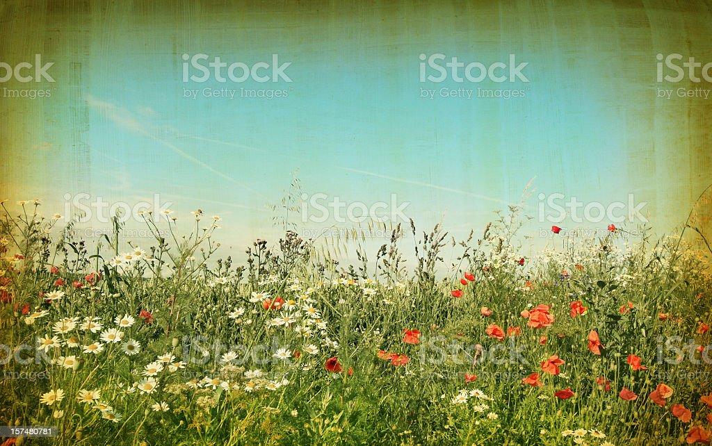 Vintage field of Wildflowers royalty-free stock photo