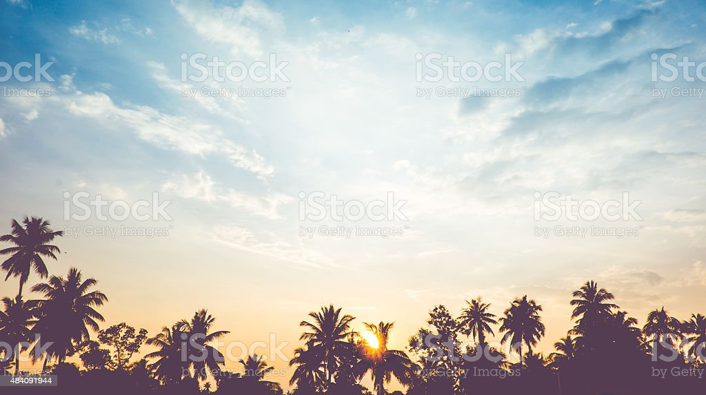 vintage filter : silhouette landscape of coconut tree ,tropical stock photo