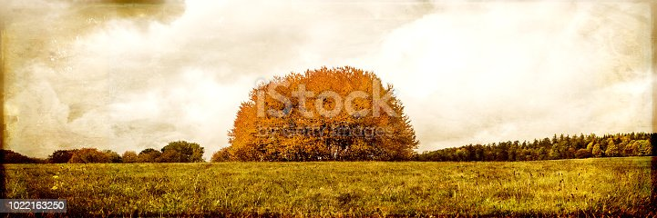 vintage filtered landscape, group of tree on a field, panorama