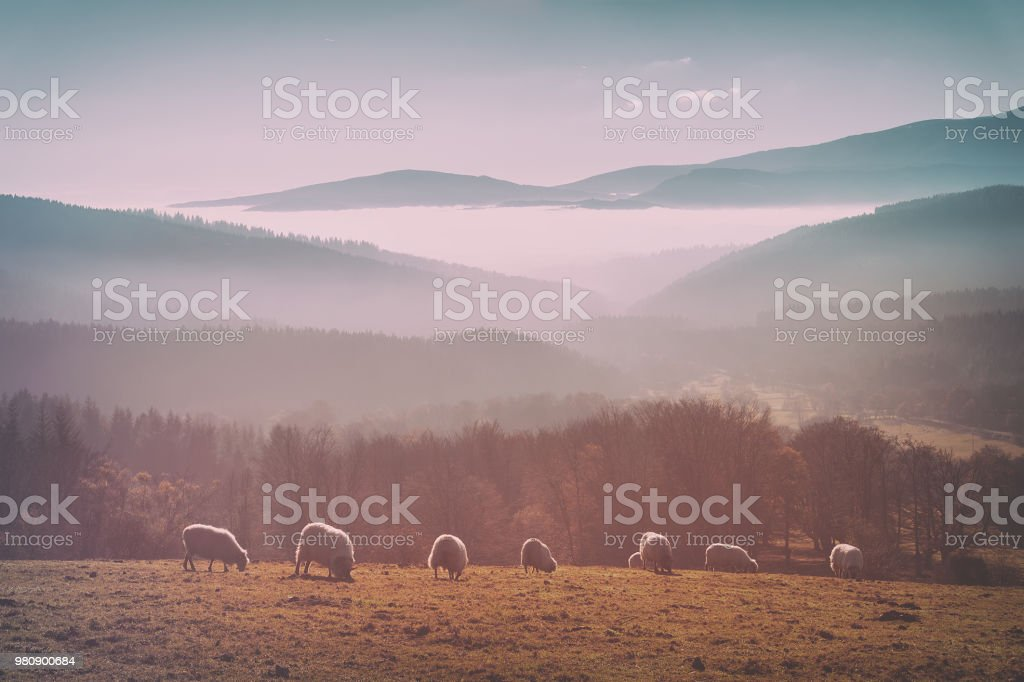 Vintage troupeau de moutons - Photo