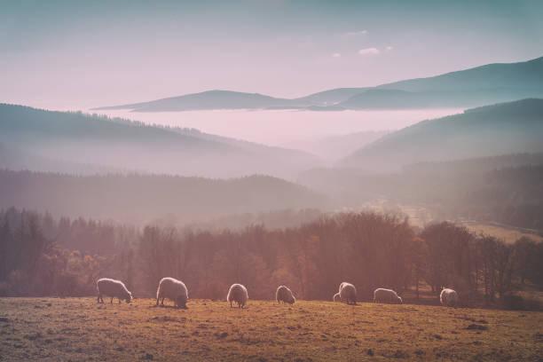 Vintage rebaño de ovejas - foto de stock