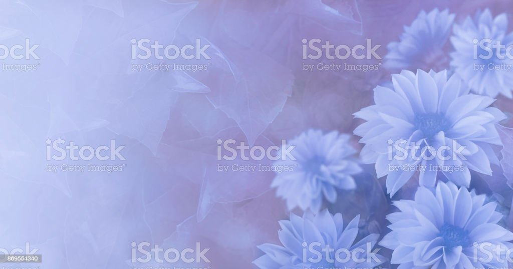 Vintage floral blue-violet beautiful background.  Yellow flowers Dahlia.  Nature. stock photo